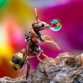 Wasp 151023A by Carrot Lim - Animals Insects & Spiders ( colour, macro, wasp, insect, water droplets,  )