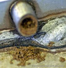 Photo: Das anscheinend harte Materiel wird immer wieder angefeuchtet und dazu muss sie von irgendwo Tropfen herbeischleppen
