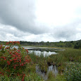 Wildlife in fresh waters and wetlands of NE USA