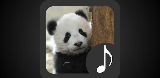 Приложения в Google Play – Panda Sounds