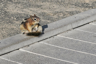 Photo: Yellowstone is famous for it's megafauna, but don't forget the little guys.
