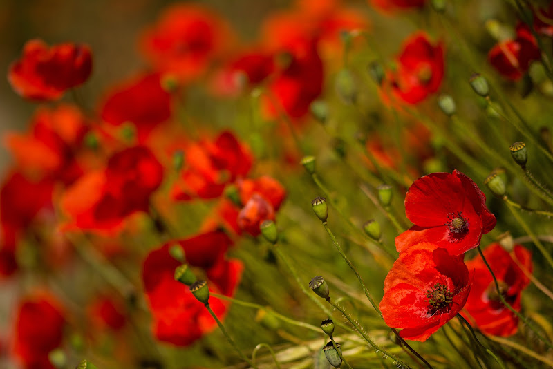 Red passion di LucaMonego