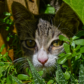 Hiding by Mario Denić - Animals - Cats Portraits ( cool, cat, green, portrait, animal )