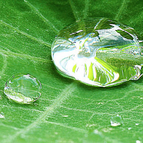 Bubble by Fernando Cordeiro - Nature Up Close Water ( water, nature, green, sheet, rain )