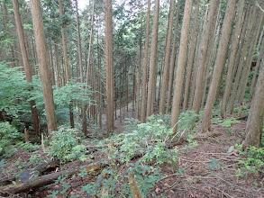 右下に林道があるが無視(こちらからも下山可能)