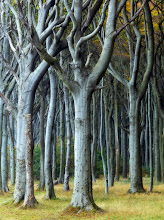 Photo: Rostock, Germany  I found an interesting piece of landscape in Eastern Germany. Except for sandy beaches it's known for old beech forests. Below one of them. Enjoy!