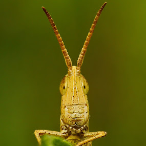 HALLO by B Iwan Wijanarko - Animals Insects & Spiders