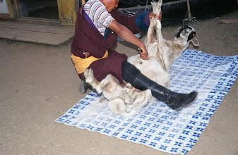 Photo: 03386 ブルド/ハスバター家/羊の解体