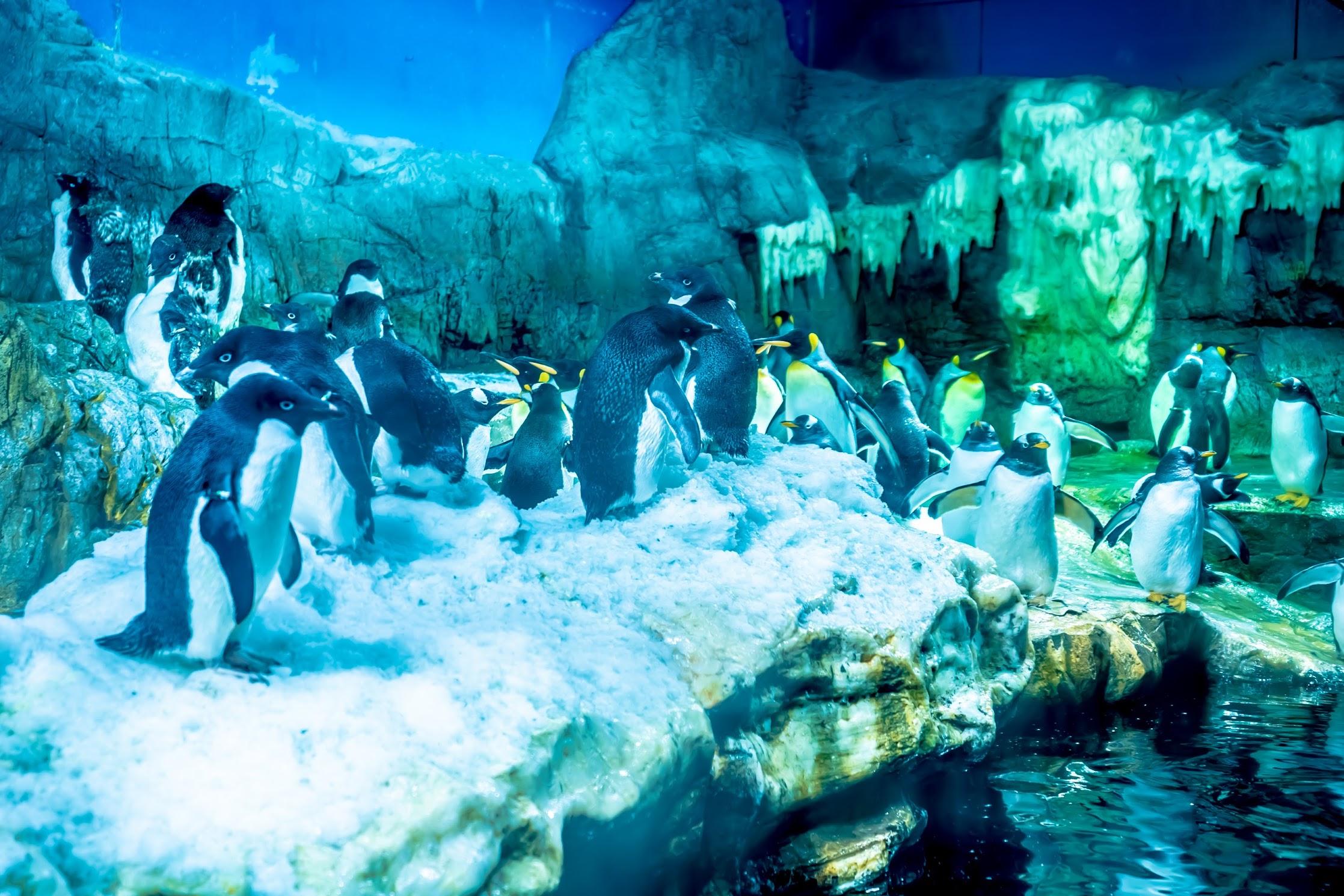 海遊館 ペンギン2