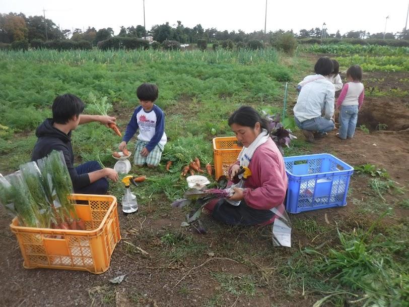 この日は、畑が賑わいでいました。農業王子が手伝ってくれて、里芋掘り、ゴボウ掘りのあとの人参の袋詰めです。常連K親子もいますね!