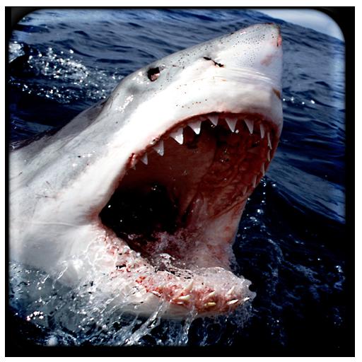 Shark Live Wallpaper