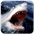 Shark Live Wallpaper icon