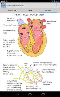 Anatomy Flash Cards- screenshot thumbnail