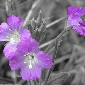 by Arif Burhan - Flowers Flowers in the Wild