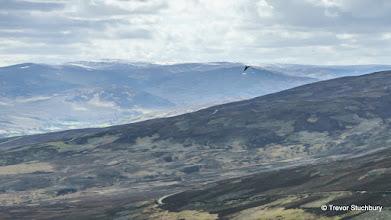 Photo: Golden Eagle, Hill of Saughs, Mount Battock