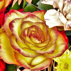 thanksgiving flowers by Bruce Newman - Flowers Flower Arangements ( colorful flowers, rose, vivid colors, macro closeup, flower photography,  )