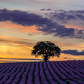 Lavender smell by Vaska Grudeva - Landscapes Prairies, Meadows & Fields (  )