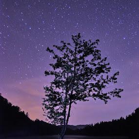 Lonely tree by Zoran Stanko - Nature Up Close Trees & Bushes ( water, swen11, nature, tree, croatia, lake )