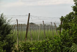 Photo: Winnice w Preboldzie