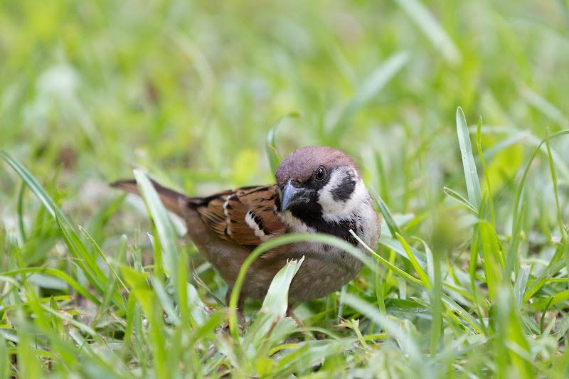Photo: Tall grass