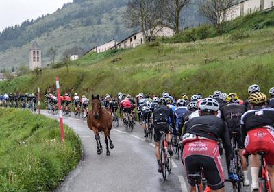 """Loslopend paard schrikt renners op: """"Een kleine hartaanval"""""""
