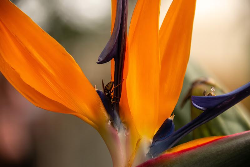 Il fiore del Paradiso e la vespa di Concetta Caracciolo