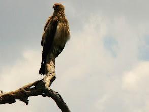 Photo: AUSTRALIE-Aigle