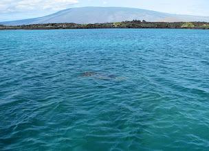 Photo: Jos katsot tarkkaan näet merikilpikonnan uimassa!