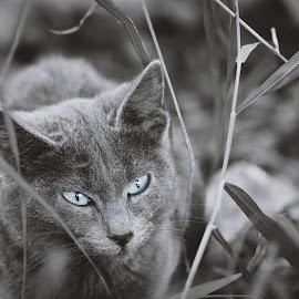 Eyes by Theodoros Theodorou - Animals - Cats Portraits ( outdoor, x-t1, cat, monochrome, expressive eyes, fujifilm, cyprus )