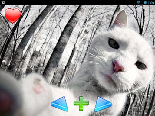 玩免費娛樂APP|下載自貓 app不用錢|硬是要APP