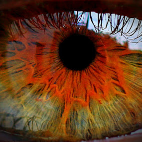 The eye.. by René Wright - People Body Parts ( blessed, sight, green, wonder, star, brown, eye,  )
