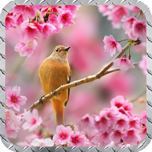cherry dating schweiz Online dating safety over three thousand couples will meet and marry through cherry blossoms this year and thousands more will make friendships that will last a lifetime.