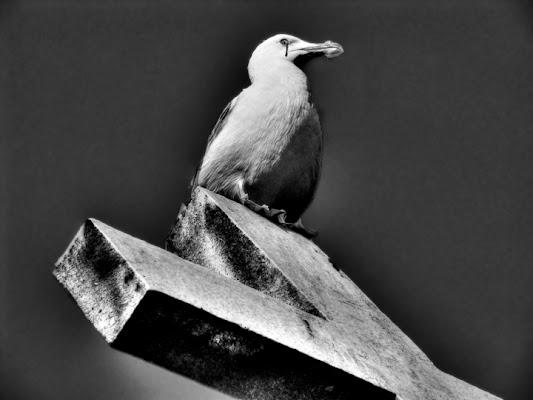 Gli Uccelli di Daphne Du Maurier di Maccarrone Alfredo