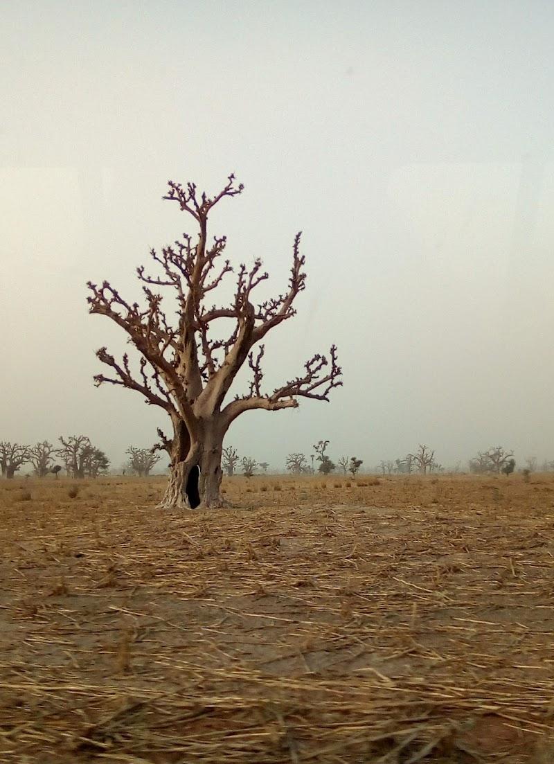 Un solo albero di Giovanna_Tamponi