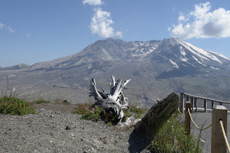 Photo: That fallen tree points to its root cause problem: 500m of Mt. St. Helens' summit are missing since the explosion on May 18th 1980.