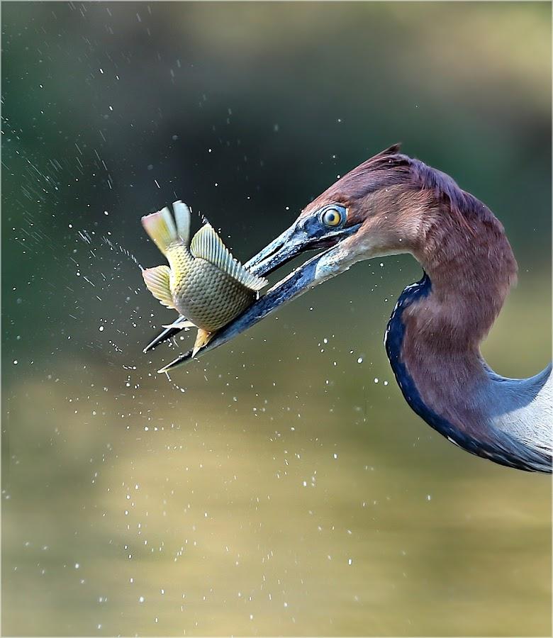 by Geo Jooste - Animals Birds