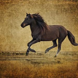 Texture stallion-Edit.jpg