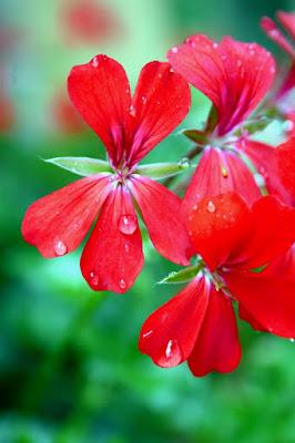 Flowers tears di alejandro