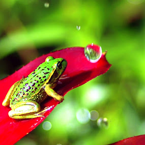 Froggie by Rodolfo Dela Cruz - Instagram & Mobile Other ( water drops, frog, leaves, insect, animal, motion, animals in motion, pwc76 )