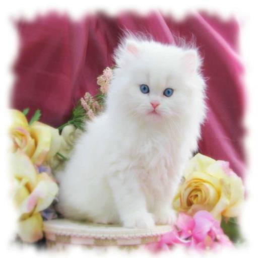 خلفيات قطط رائعه
