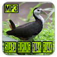 Suara Pemikat Burung Ruak Ruak Mp3