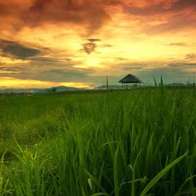 Karamabura Dompu by Erwan Setyawan - Landscapes Prairies, Meadows & Fields ( karamabura )