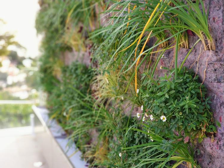 Especies en el jardín vertical