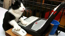 Sam el gato (COPY)