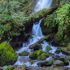 Cool Water by Mike Moody - Landscapes Waterscapes ( moss, washington state, rocks, waterfall, fallen tree,  )