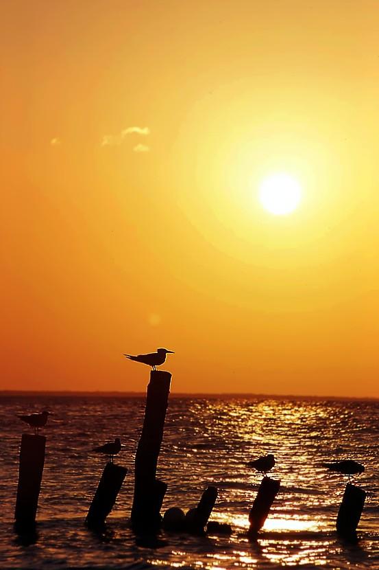 Pace nella Isla di dash