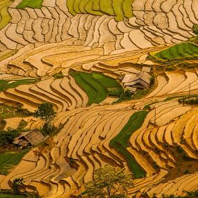 rice terraces in sapa by Sorin Tanase - Landscapes Prairies, Meadows & Fields ( hills, saps, rice, vietnam, terraces )