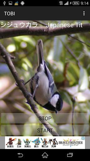 鳥鳴き声シジュウカラ