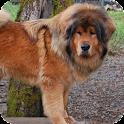 Mastiff Tibetan Live Wallpaper icon