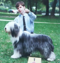Photo: Club Show of Bearded collie club Slovakia 1st place in younger category.  Judge Mrs Leslie Tomlinson, UK kennel Coalacre Sunday, August 19, 2001